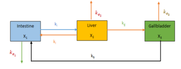 Compartmental model to estimate bile acid concentration in different clinical manifestation