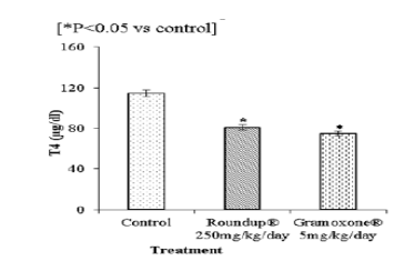 Changes in Male Rat Thyroid Gland Exposed to Roundup® and Gramoxone®